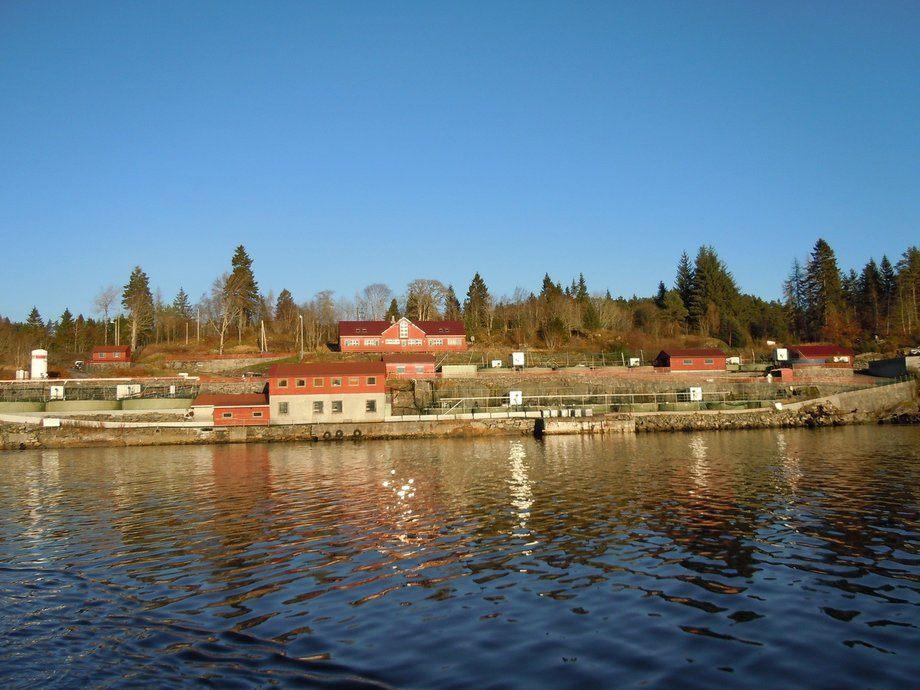 Nesfossen Smolt fikk nedgang i både omsetning og driftsresultat. Foto: Nesfossen Smolt.