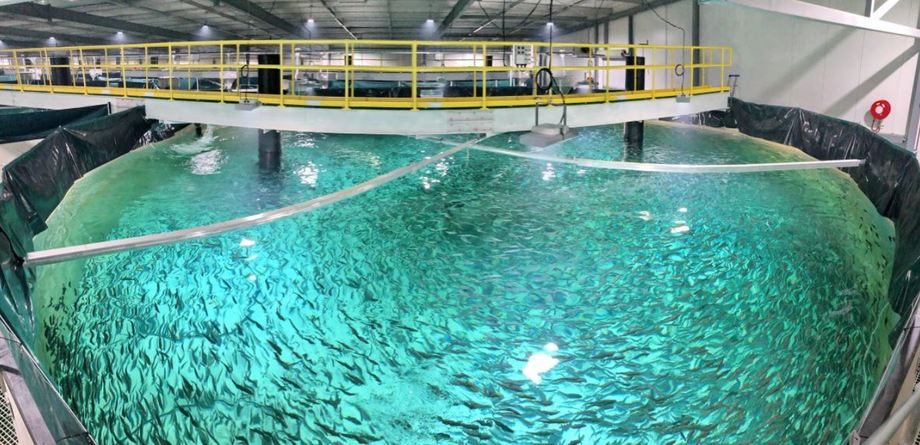 Inside Whale Point nursery, where fish are being grown to around half a kilo. Photo: Patrick Tigges / Billund Aquaculture.