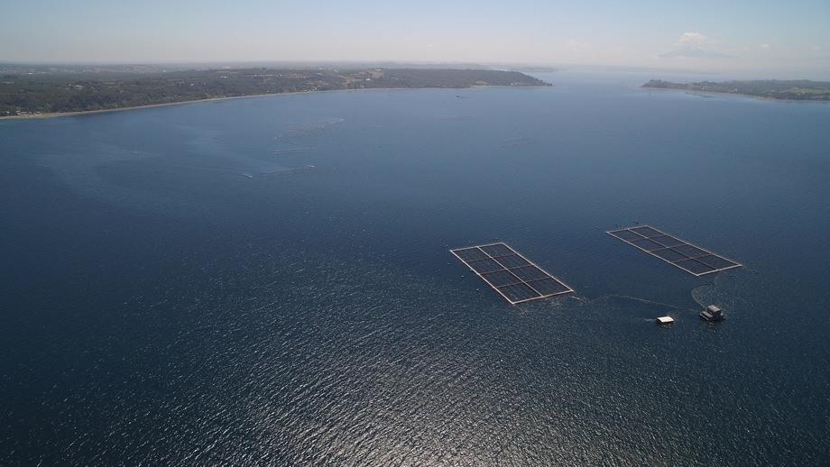 Centro de cultivo de salmón de AquaChile. Foto: AquaChile.