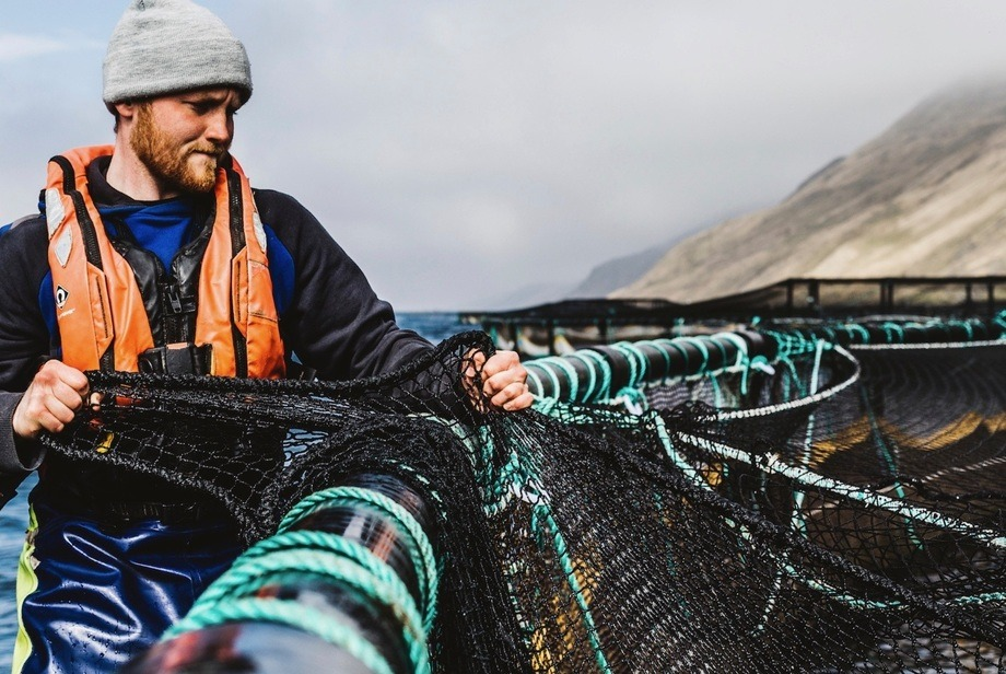A Scottish Sea Farms employee in Shetland, where salmon farmers have been classed as Category 2 key workers. File photo: SSF.
