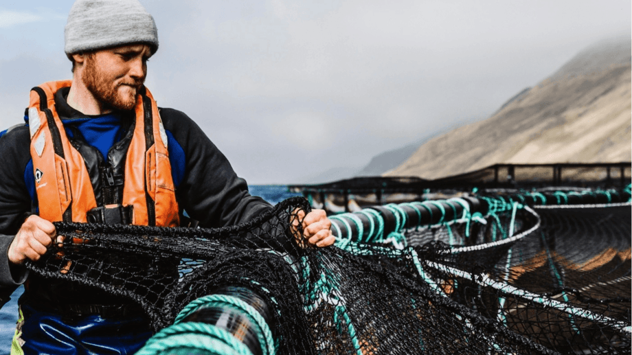 Scottish Sea Farms is seeing positive results from a £5.7m investment in anti-seal netting. Photo: SSF.