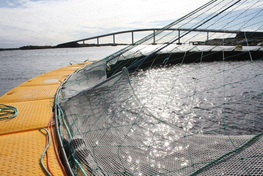 Lukket anlegg: Det finnes ulike prototyper av lukkede anlegg i sjø, men foreløpig ingen i kommersiell produksjon. En tett vegg skiller miljøet i havet fra fisken på innsiden av anlegget. Foto: Reidun Lilleholt Kraugerud, Nofima.