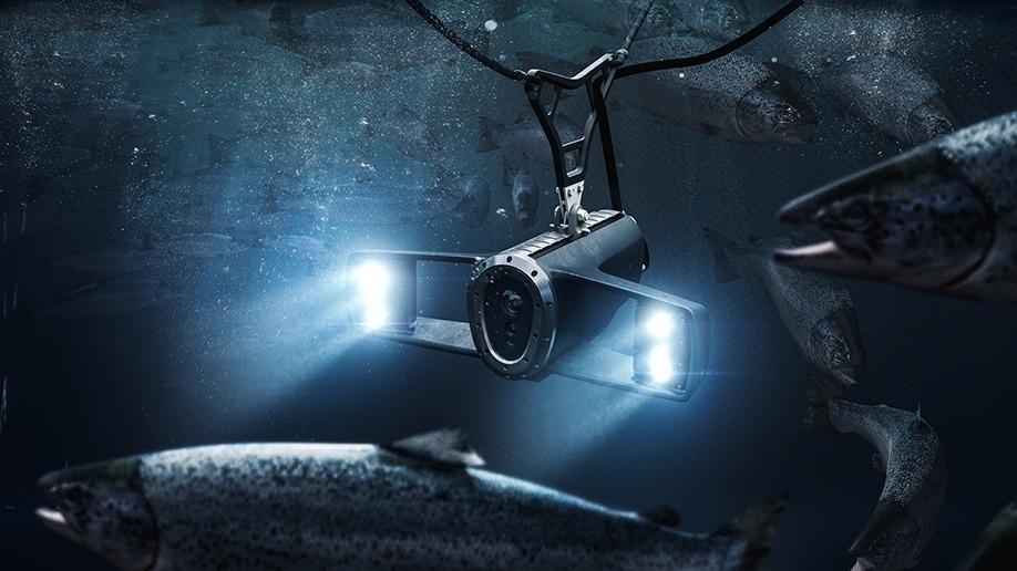 Cada imagen tomada por la cámara será analizada sin la necesidad de interpretación o participación humana. Foto: Ecotone.
