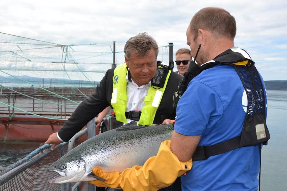 El ministro de Pesca de Noruega, Harald T. Nesvik, inspecciona el salmón en Eide Fjordbruk. Foto: Margarita Savinova.