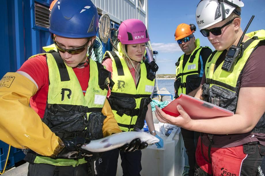 Sesongens uavhengige testprogram rundt SkaMik 1.5 har vært ledet av veterinær Aoife Westgård (rosa hjelm) fra Aqua Kompetanse. Foto: Tom Lysø