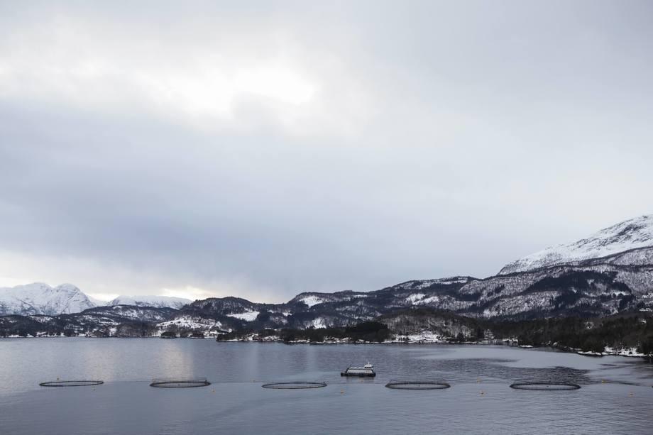 En av Lingalaks sine lokaliteter i Hardanger, der laksen blir fôret på algeolje. Foto: Veramaris
