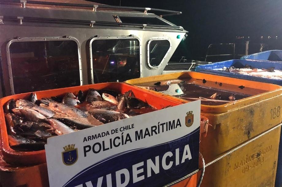 Parte de las 25 toneladas de salmón incautadas. Foto: Armada de Chile.