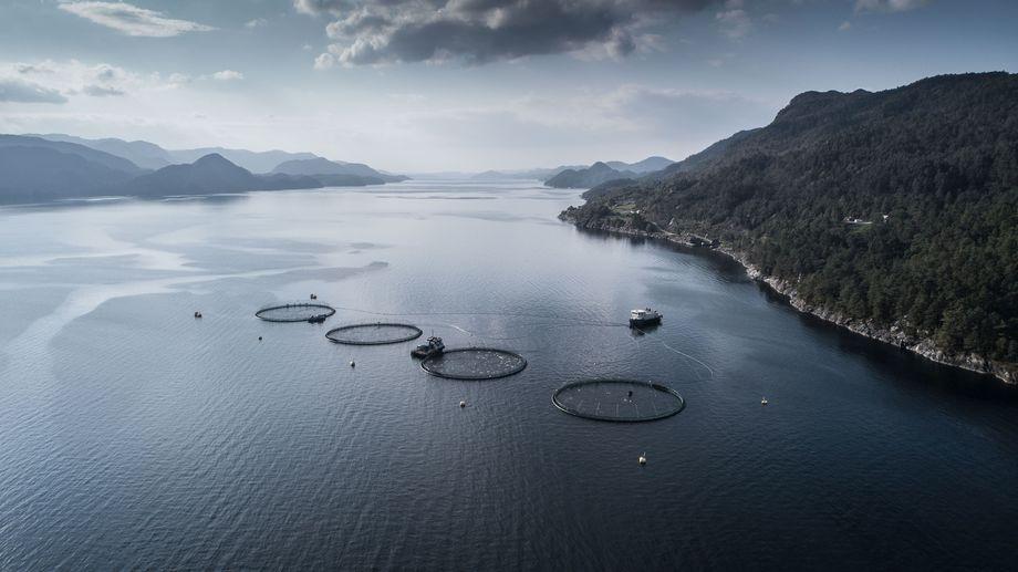 Bellona, ABB og Bremnes Seashore forteller i en melding at helelektrifisering gir både stor miljøgevinst og bedre økonomi.