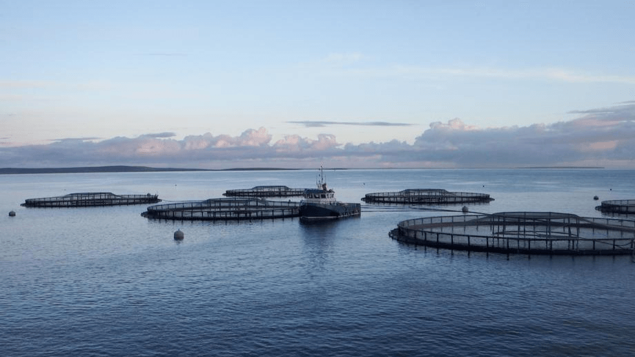 Scottish Sea Farms made a lower year-on-year Q2 profit. Photo: SSF.