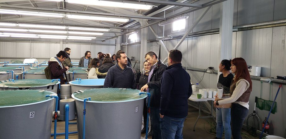 Unidad experimental de recirculación acuícola de la Universidad de Chile. Foto: Universidad de Chile.