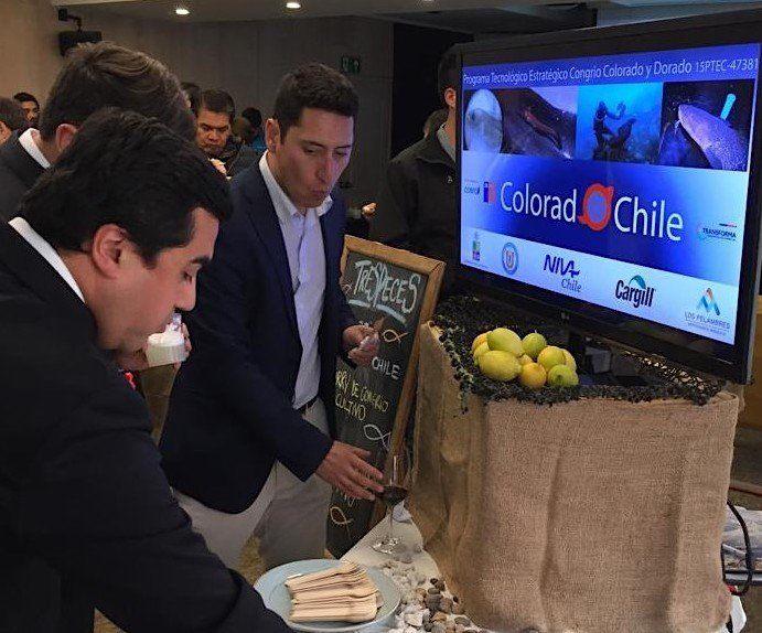 Asistentes a la actividad Coquimbo Day pudieron degustar preparaciones en base a Congrio Colorado de cultivo. Foto: Colorado Chile.