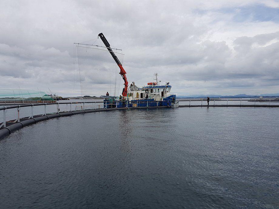 Red de energía eléctrica para inactivar los piojos de salmón. Foto: SFD.