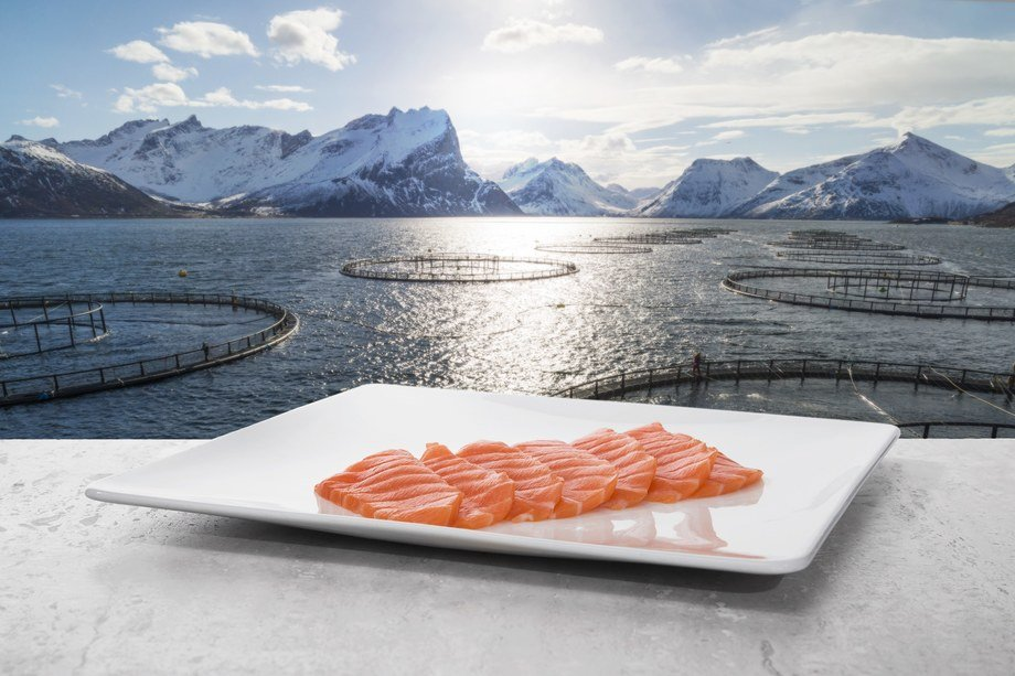 Norway's salmon exports hit a record high for August. Photo: Norwegian Seafood Council.