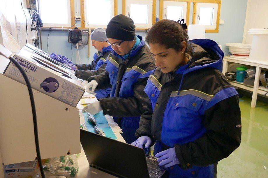 Investigadores realizando las pruebas sobre ácido peracético para tratar AGD. Foto: Nofima.