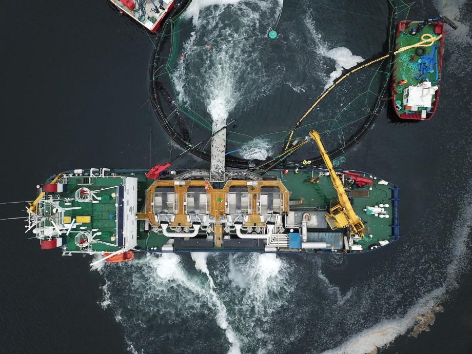 Tratamiento mecánico para desparasitación del salmón Optilicer. Foto: Optimar.