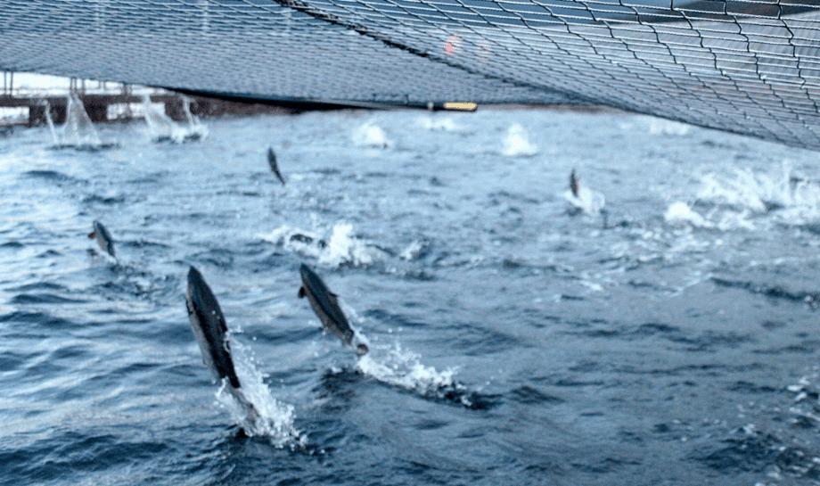 Centro de cultivo de salmón de Multiexport Foods. Foto: Multiexport Foods.