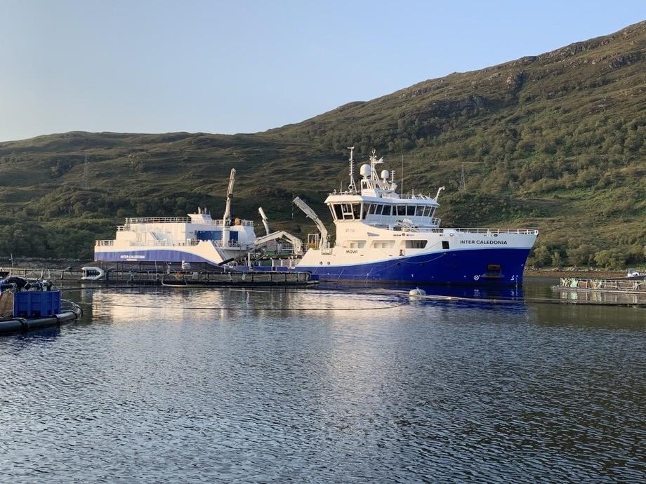 El wellboat M/N Inter Caledonia de Intership. Foto: Intership.
