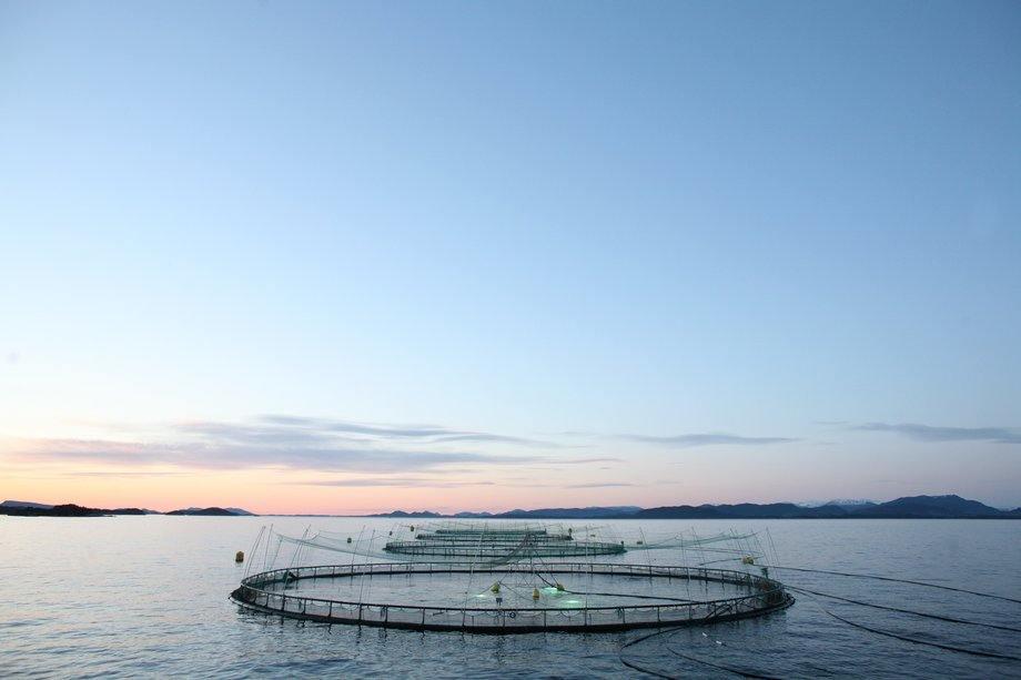 Et godt sluttresultat gir god virkning i sjø.         Foto: Rolf Mork-Knudsen, NetCare