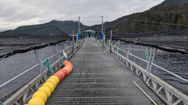 A Mowi Canada West salmon farm. Some farms in the Broughton Archipelago will be phased out under scrutiny of local First Nations. Image: Iayisha Khan.