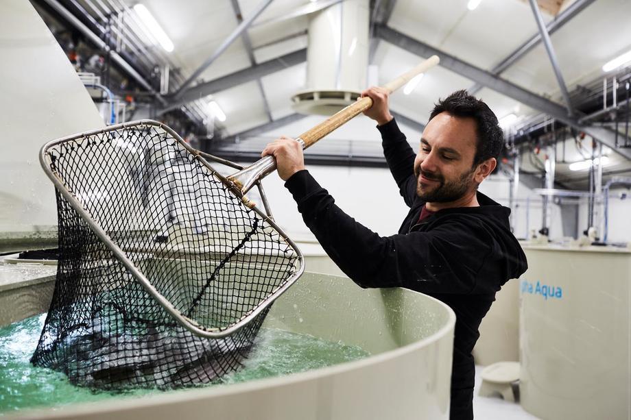 BioMar se encuentra trabajando para desarrollar alimentación especial para sistemas RAS. Foto: Biomar.