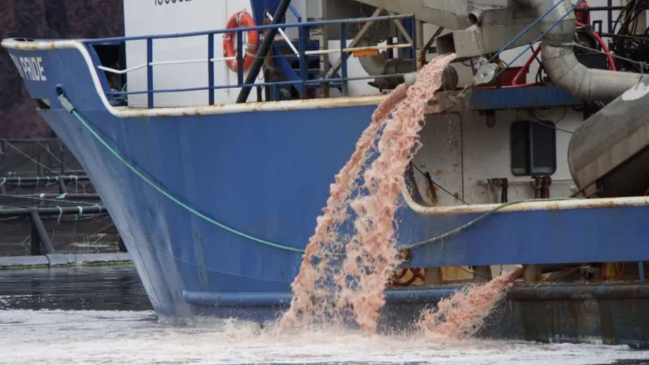 Pink liquid pours out the side of a vessel hired for the clean-up at the Northern Harvest Sea Farms salmon pens in Fortune Bay. Photo: Chris O'Neill-Yates / CBC.