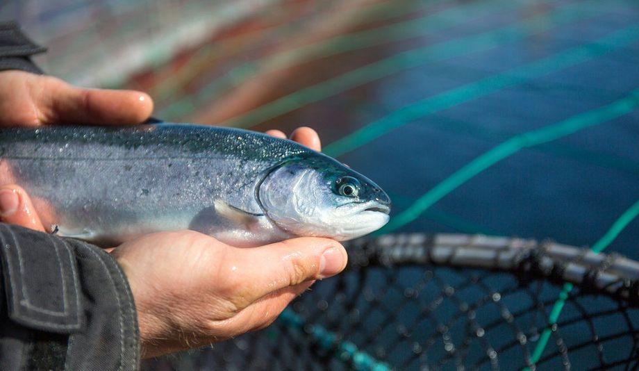 Foto: Eivind Senneset / Havforskningsinstituttet