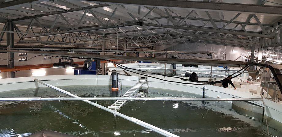 RAS-avdelingen til Sævareid Fiskeanlegg: hvert kar har plass til ca 160 000 - 199 999 fisk. Foto: Kyst.no