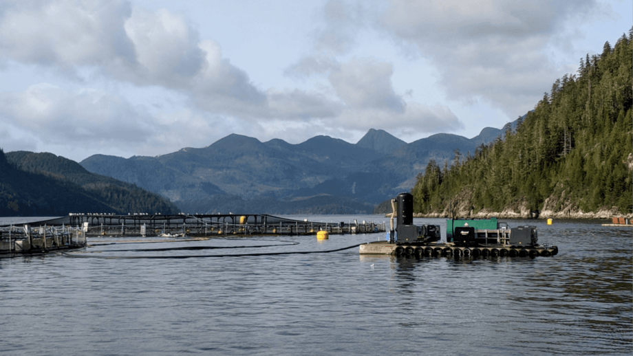 A salmon farm in British Columbia. A study claims PRV was imported to BC with salmon eggs.