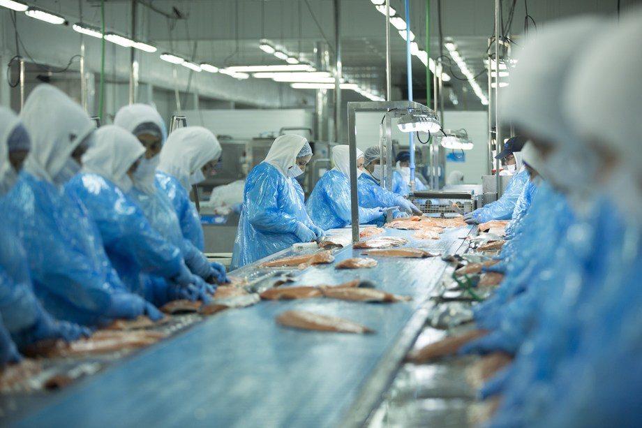 Planta de procesos de Salmones Austral en Quellón. Foto: Salmones Austral.