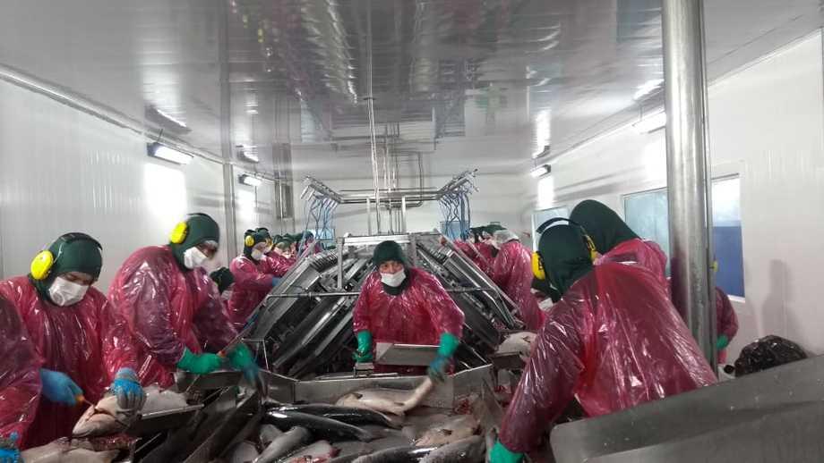 Trabajadores de la planta de procesos de Salmones Austral retomando sus labores ayer. Foto: Mesa de Trabajadores Salmoneros de Quellón.