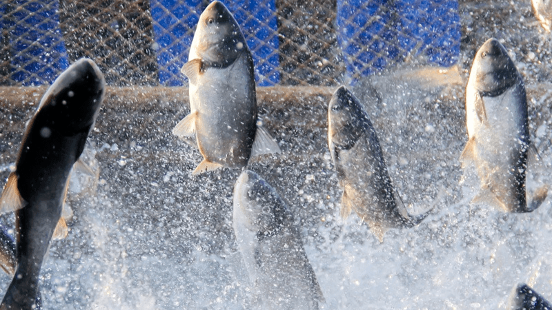 Wilbur-Ellis is expanding its interest in aquaculture nutrition. Photo: Wilbur-Ellis.