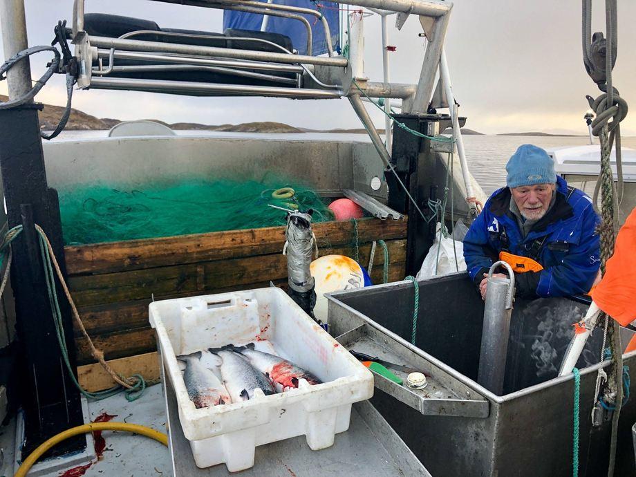 På bildet ser vi Sigurd Martin Reløy om bord i fiskebåten «Hafbjørg» , og i kassen ligger tre rømte laks. Foto: Lovundlaks