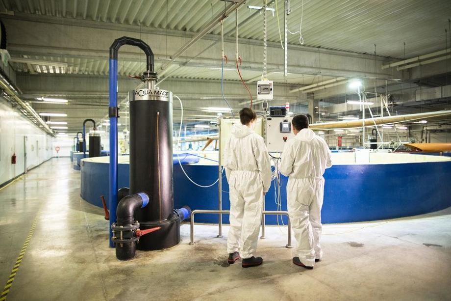 El centro de I + D y formación global de AquaMaof en Varsovia, Polonia, produce smolt y salmón atlántico listo para el mercado de hasta 6 kilos. Foto: AquaMaof.