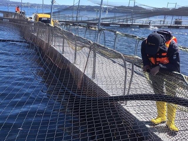 Centro de cultivo de salmón Cahueldao de AquaChile. Foto: Sernapesca.