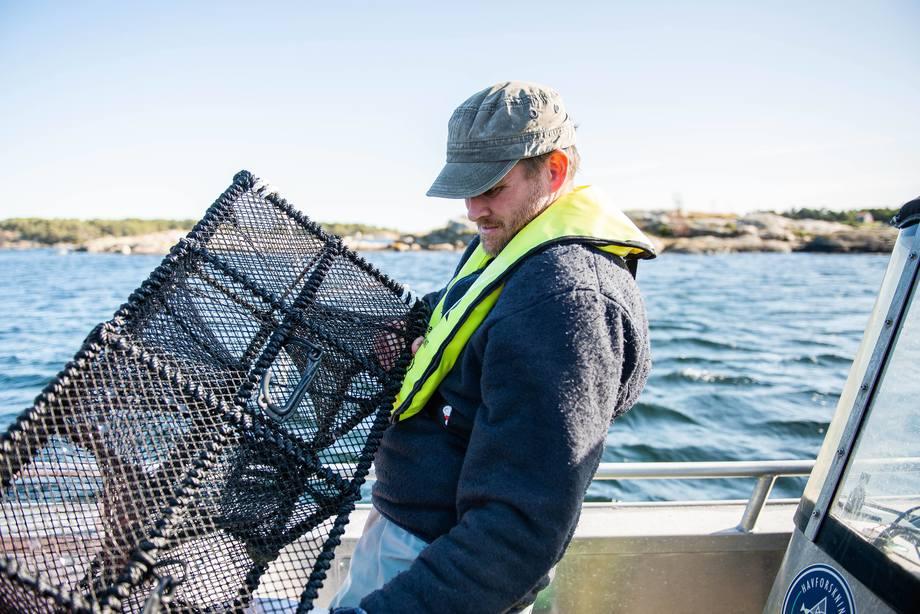 De små fiskene er mest opptatt av å finne skjul. Derfor har forskere funnet ut at leppefiskteiner uten agn fungerer godt til å fange de små fiskene. Foto: Christine Fagerbakke/Havforskningsinstituttet.