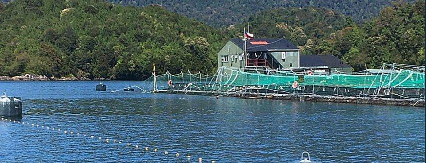 Centro de cultivo de Marine Farm sufrió escape de salmones. Foto: Sernapesca.