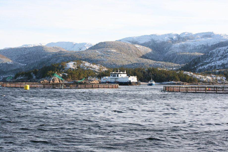 Fjord Maritim forteller at deres hybridløsning reduserer gangtiden til dieselgeneratoren på fôrflåtene med inntil 90 prosent. Foto: SalmoNor