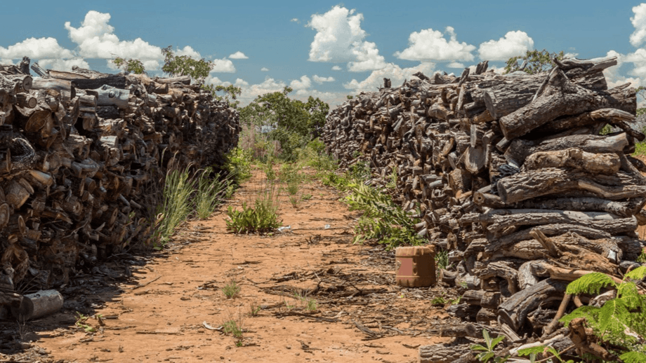 Deforestation in the Cerrado, a vast tropical savanna ecoregion of Brazil that is home to about 10,000 plant species, 10 endemic bird species and nearly 200 species of mammal.