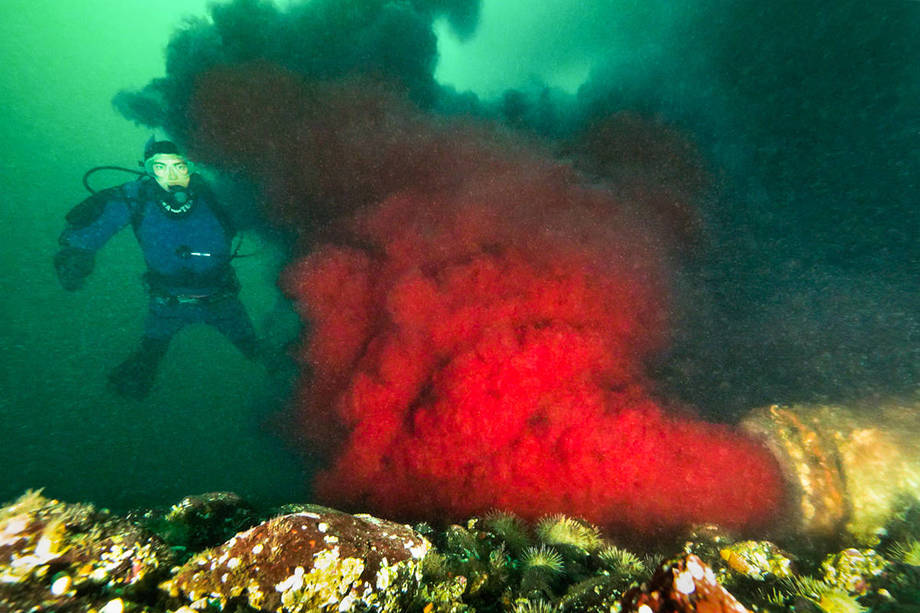 Still image taken from the video from Tavish Campbell's dive which shows a red blood like substance flowing into the water. Image: Google Images