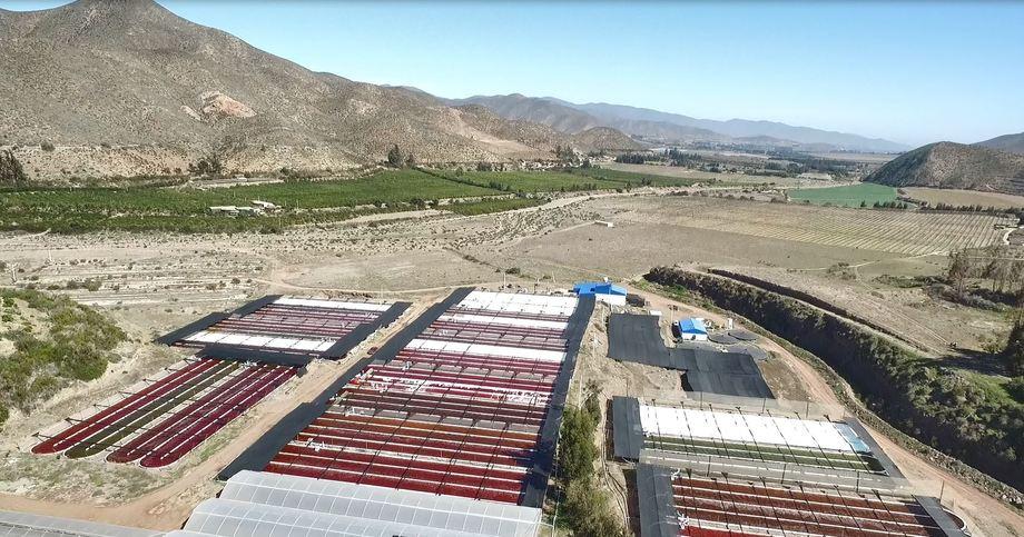 Instalaciones del cultivo de microalga en Valle del Elqui. Foto: AquaPacífico.