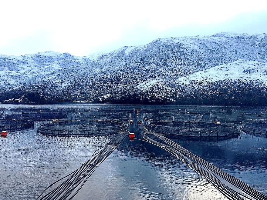 Imagen referencial de centro de cultivo en Magallanes. Imagen: Archivo Salmonexpert.