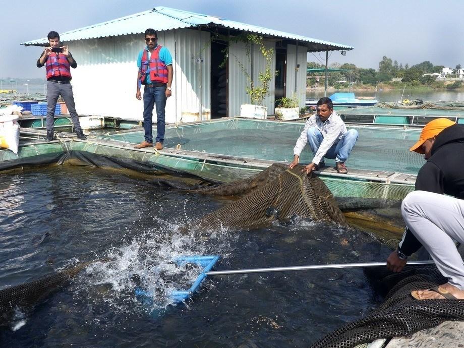 Cultivo de tilapia en India. Foto: Pål Mugaas Jensen.