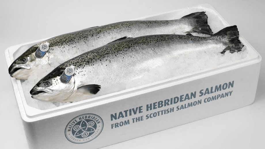 The Scottish Salmon Company made an operating loss in Q4 and for 2020 as a whole. Photo: SSC.