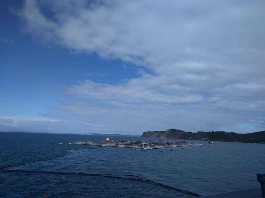 Centro de cultivo de salmón de Invermar. Foto: Invermar.