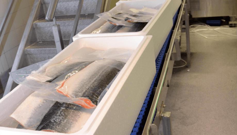 Enny fortolkning av fiskekvalitetsforskriften betyr at det blir innført stopp av eksport av oppdrettsfisk med feil og mangler. Illustrasjonsfoto: Illustrasjonsfoto av laks til eksport. Foto: Linn Therese S Hosteland