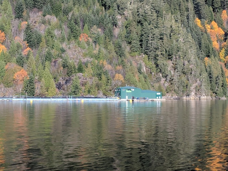 Trees lining the waters edge near a salmon farm in Gold River, British Columbia. Image: Iayisha Khan