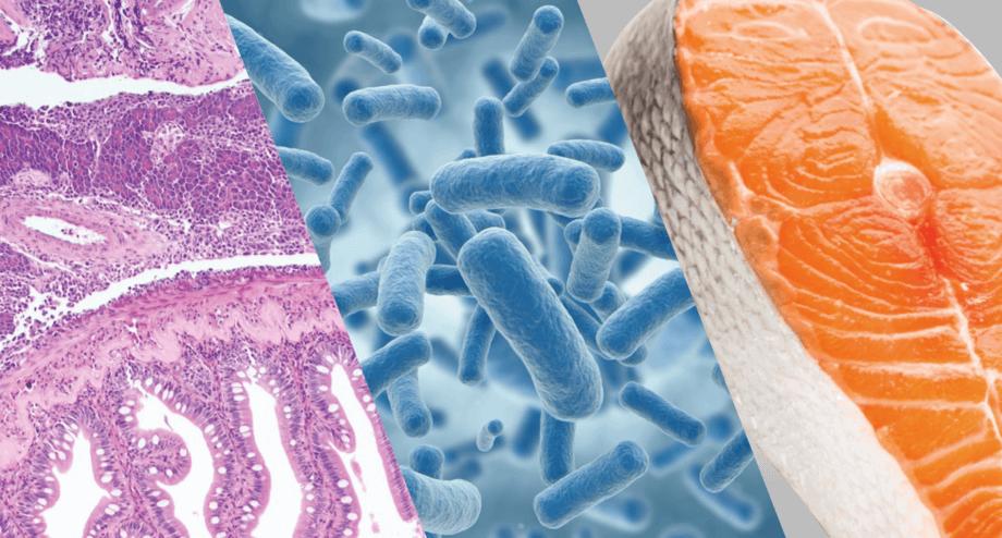 A los servicios de histopatología se suman análisis de microbioma y nutrición y salud. Foto: CIBA.