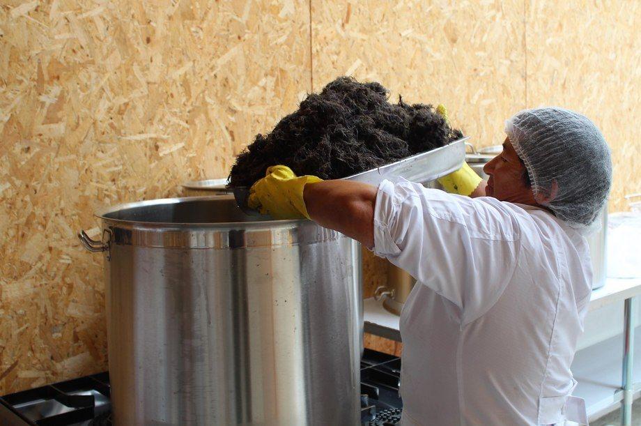 De acuerdo con el documento, las mujeres presentaron casi exclusivamente solicitudes asociadas al cultivo de algas (pelillo). Imagen: Fundación Chinquihue. .