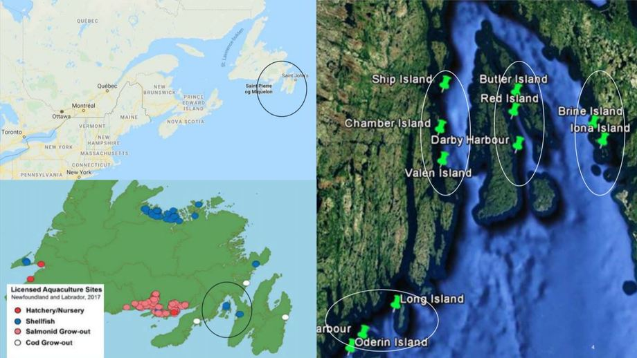 The Placentia Bay sites are a long way from other salmon farms and have a similar temperature profile to Norway. Image: Grieg Seafood.
