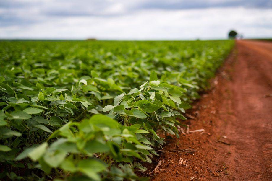 MDG ønsker å forby import av soya til dyrefôr. Foto: Skretting
